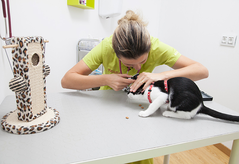 Veterinario para Gatos en Can Picafort | Vilazoo Veterinaris